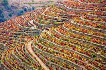 Bild für Kategorie Douro