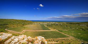 Bild für Kategorie Languedoc-Roussillon