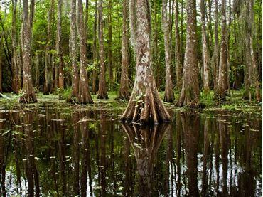 Bild für Kategorie Louisiana